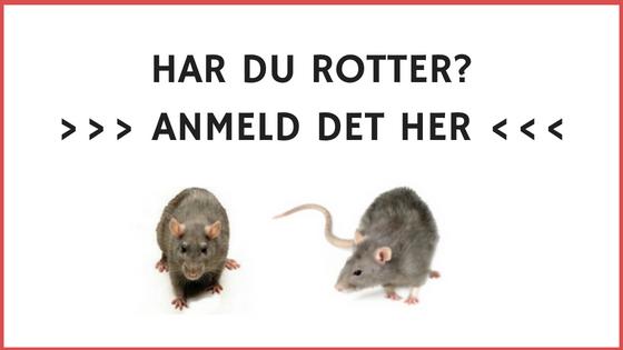 Klik her - for anmelde rotter